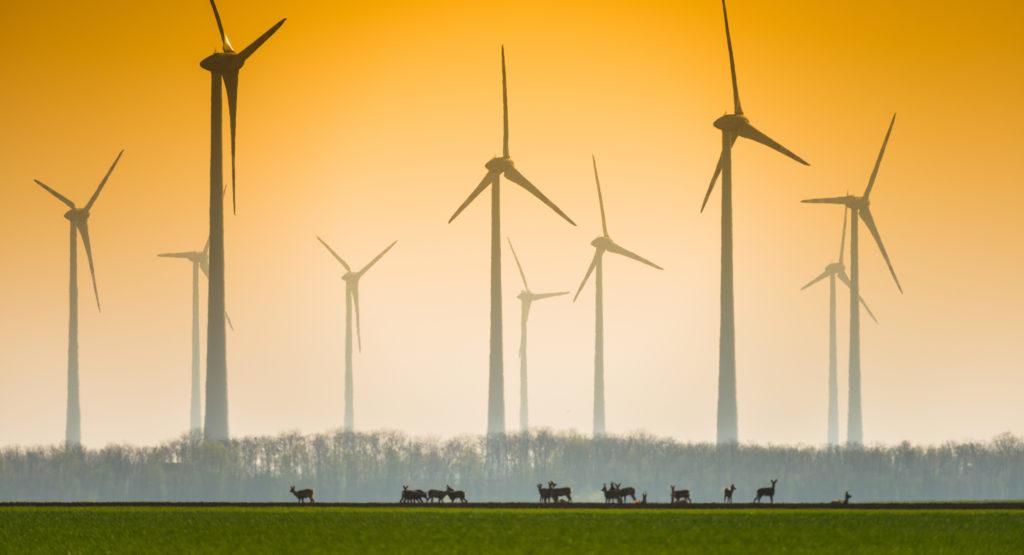 Wildtiere vor Windrädern in der Dämmerung